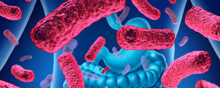 Microbiota y sistema inmune, dúo dinámico