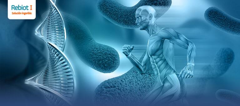 Beneficios en la salud general gracias a la microbiota