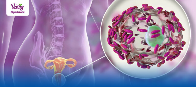 Importancia de la microbiota vaginal